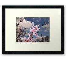 Apple Blossoms Photo Framed Print