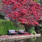 Quiet Corner - Bisley Garden - Mt Wilson NSW by Bev Woodman