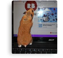 redbubble hamster Canvas Print