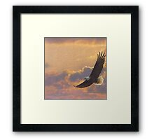 Bald eagle in flight  Framed Print