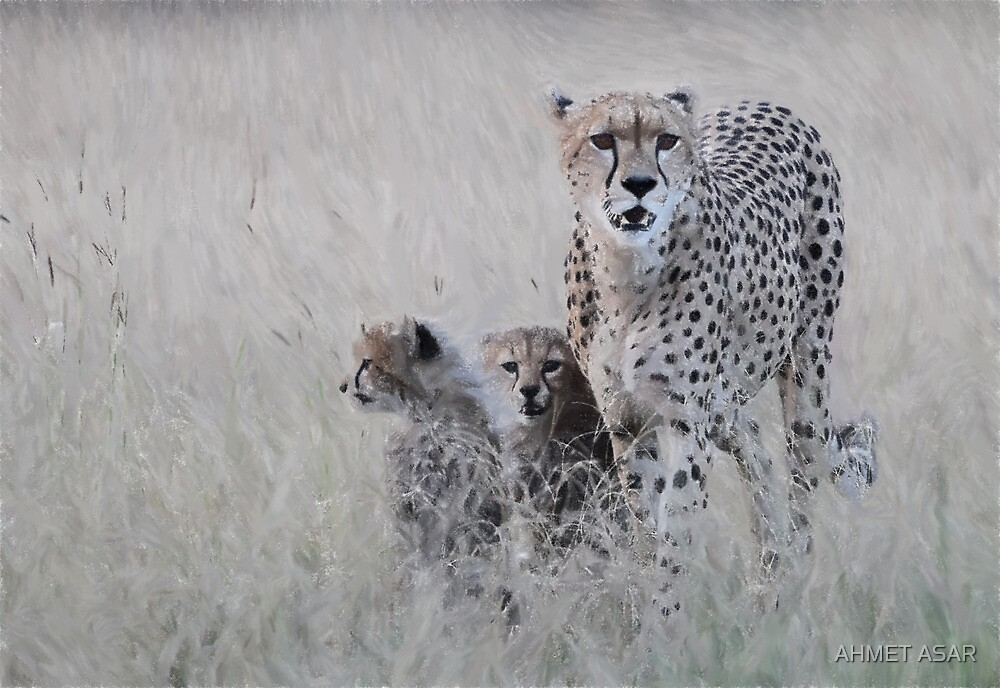 Leopard mother and cub by MotionAge Media