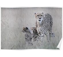 Leopard mother and cub Poster