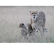 Leopard mother and cub Photographic Print