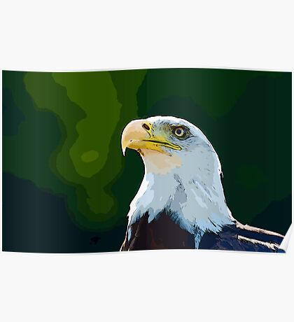 Beautiful Bald Eagle Poster
