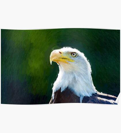 Beautiful Bald Eagle 2 Poster