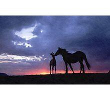 Horses in Love 2 Photographic Print