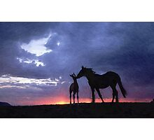 Horses in Love 2 Photographic Print