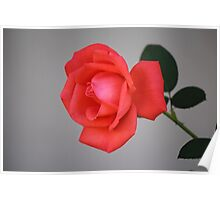 Wall Flower Poster