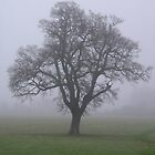 Misty Morning Oak by Lucy Wilson