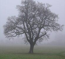 Misty Morning Oak by Lucy Wilson