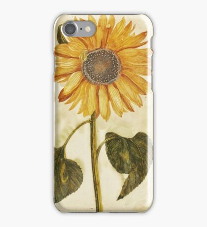 Sunflower by Johan Teyler, 1688 iPhone Case/Skin