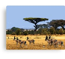 Antelopes Canvas Print