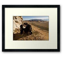 Vanishing Habitat Framed Print