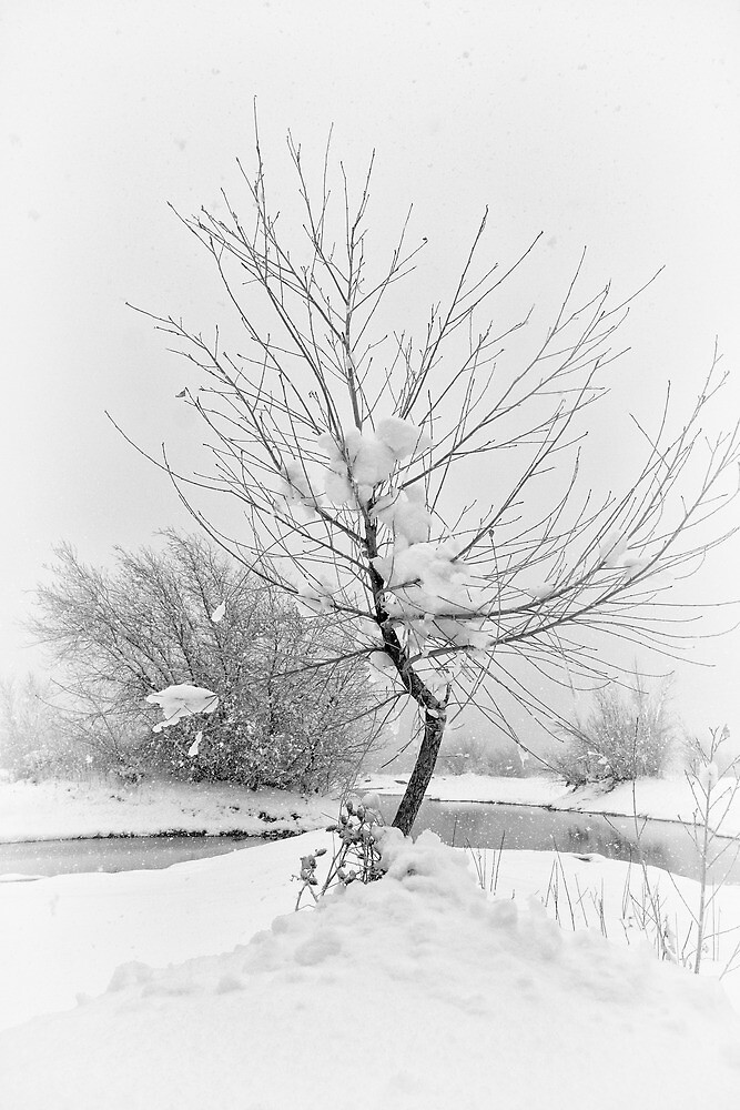White Bend by Bob Larson