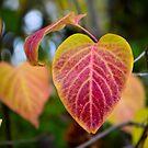 Lilac Love by seeya