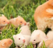 Golden hamster with her young litter on the lawn Sticker