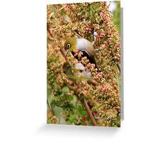 Silvereye Greeting Card
