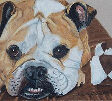 Gus - English Bulldog Commission by Anita Meistrell Putman