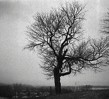 Tree on the Back Hill by Geoff Dodd