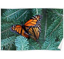Monarch's Breeding Poster