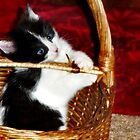 Kitten in a Basket by Nadya Johnson