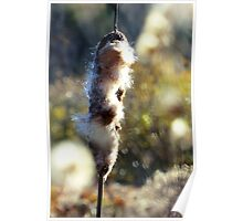 Glorious Cattails II Poster