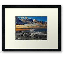 Laureana Cilento: landscape with olive grove Framed Print