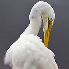 Great Egret by Keith Smith