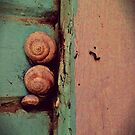 snailtrail by nessbloo