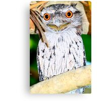 Tawny Frog Mouth close up Canvas Print
