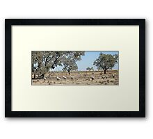 Tilpa Louth area, Outback NSW Framed Print
