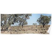 Tilpa Louth area, Outback NSW Poster