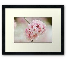 Pink Cherry Blossom Flowers Framed Print