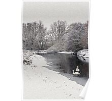 Swans in the snow Poster