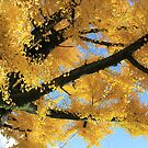 Japan - Autumn - 1 by Glenn Browning