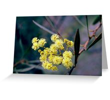 Wattle Blossom Greeting Card