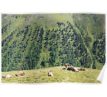 Swiss cows with a view Poster