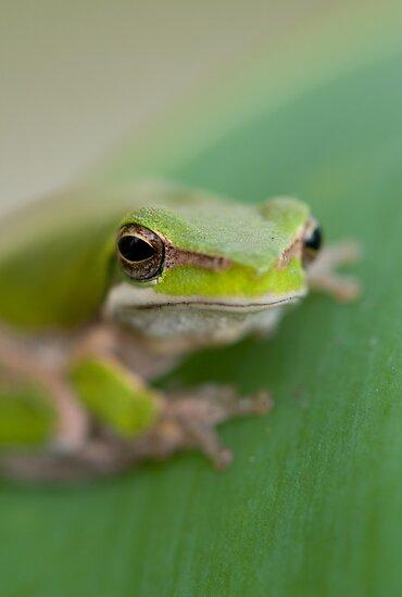 Frog #2 by Josh Gudde