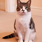 Buster is a cat that wants a home, all the details are below, I do Volunteer work for the AARU by Elaine123