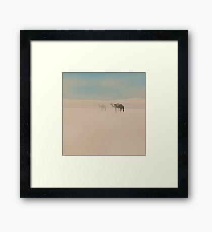 Three dromedary camels walking in Sahara desert Framed Print