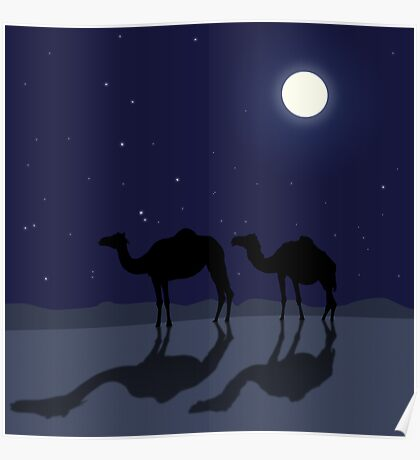 Dromedary camels in Sahara desert night Poster