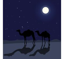 Dromedary camels in Sahara desert night Photographic Print