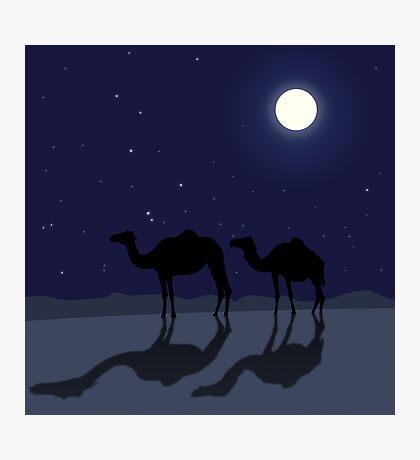 Dromedary camels in Sahara desert night Photographic Print