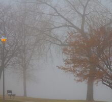 Foggy Lake View by Bo Insogna