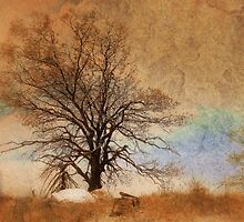 The Tree At The Top by CarolM