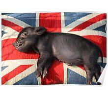 Micro pig sleeping on Union Jack cushion Poster