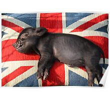Micro pig sleeping on Union Jack cushion Poster