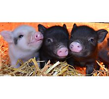 3 Little Micro Pigs Photographic Print