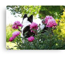 Akita With Pink Peonies Canvas Print