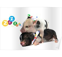 2 MICRO PIGS CUDDLING Poster